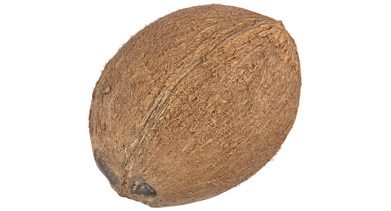 Coconut Scan 3D Model
