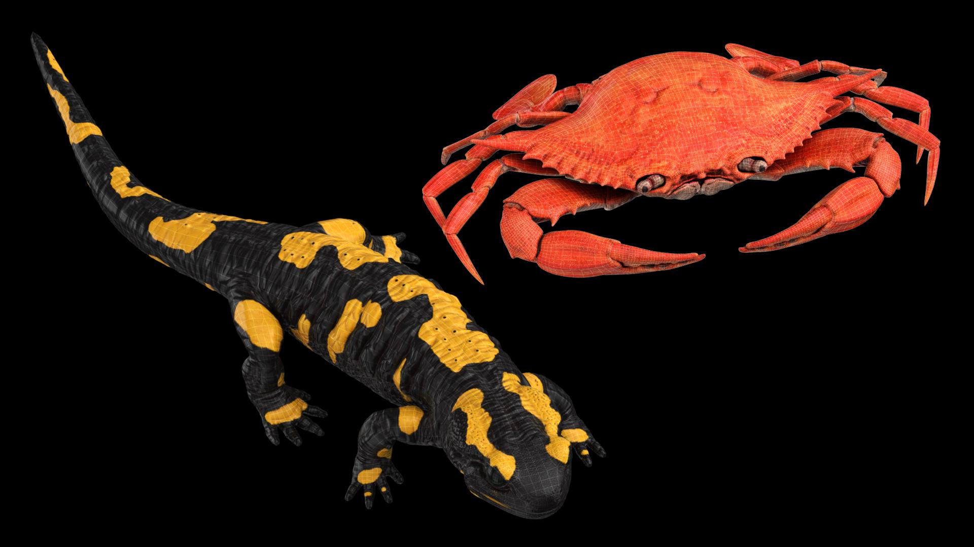 Crab and Salamander 3D Models