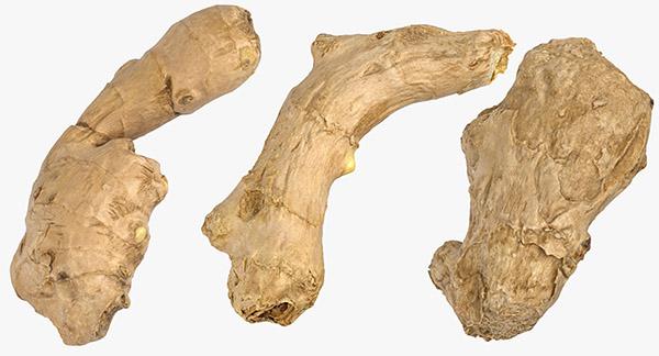 Ginger Roots 3D Models