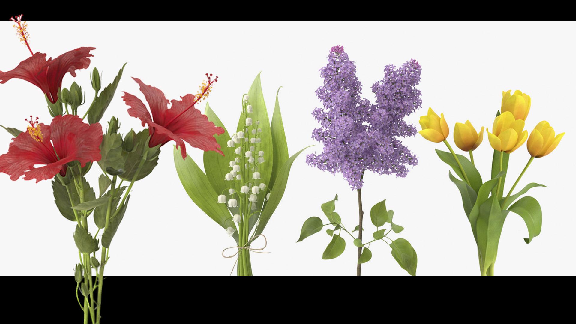 Flower 3D Models