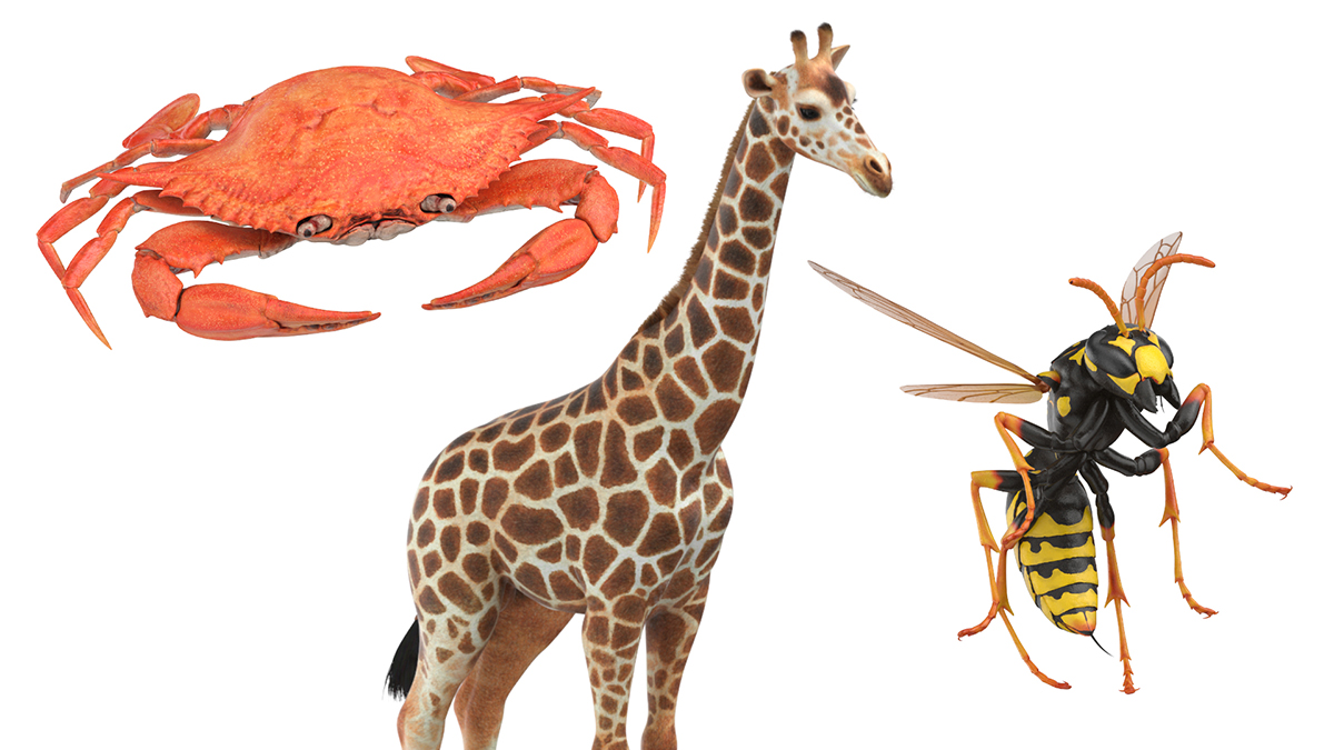 Crab Giraffe Paper Wasp 3D Models