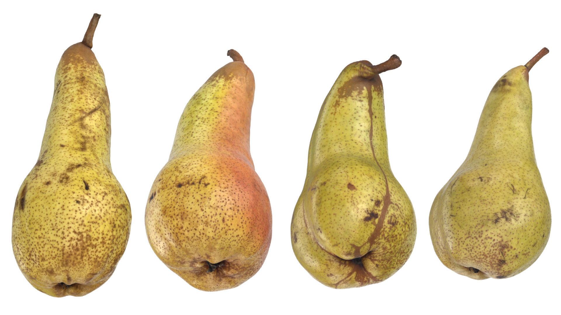 Conference Pear 3D Models