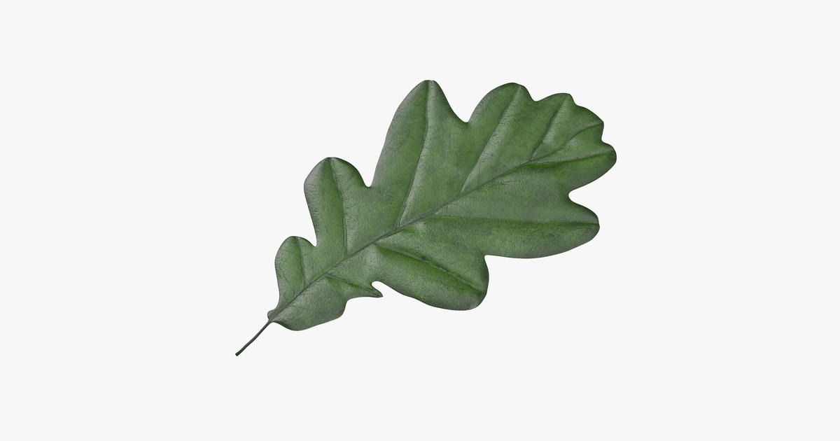 картинка коричневый лист дуба образом