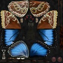 Blue Morpho Butterfly Wings Closed - thumb 22