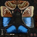 Blue Morpho Butterfly Flying Pose 02 - thumb 22