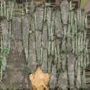 Old Dead Tree 02 - 20