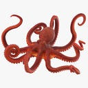 Octopus - Rigged - 1