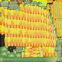 Gerbera - Yellow(1) - thumb 11