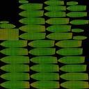 Succulent 01 - thumb 22