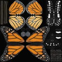 Monarch Butterfly Standing 01 - thumb 22