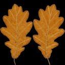 Oak Leaf Yellow 01 - thumb 20