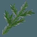 Pine Tree Sprig 02 - thumb 1