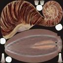 Grove snail 01 - thumb 22