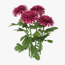 Chrysanthemum Pink - Natural Group - thumb 1