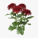 Chrysanthemum Red - Natural Group - thumb 1