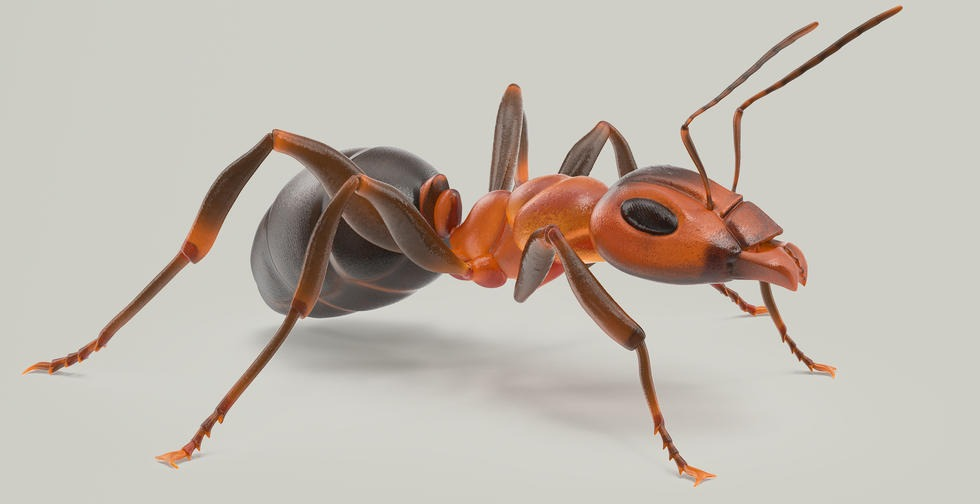 Ant 3D Model Pose