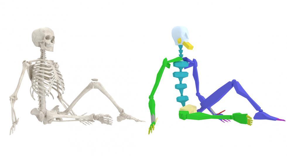 Female Skeleton 3D Model Rigged