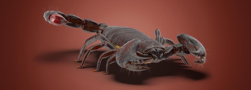 Scorpion Red