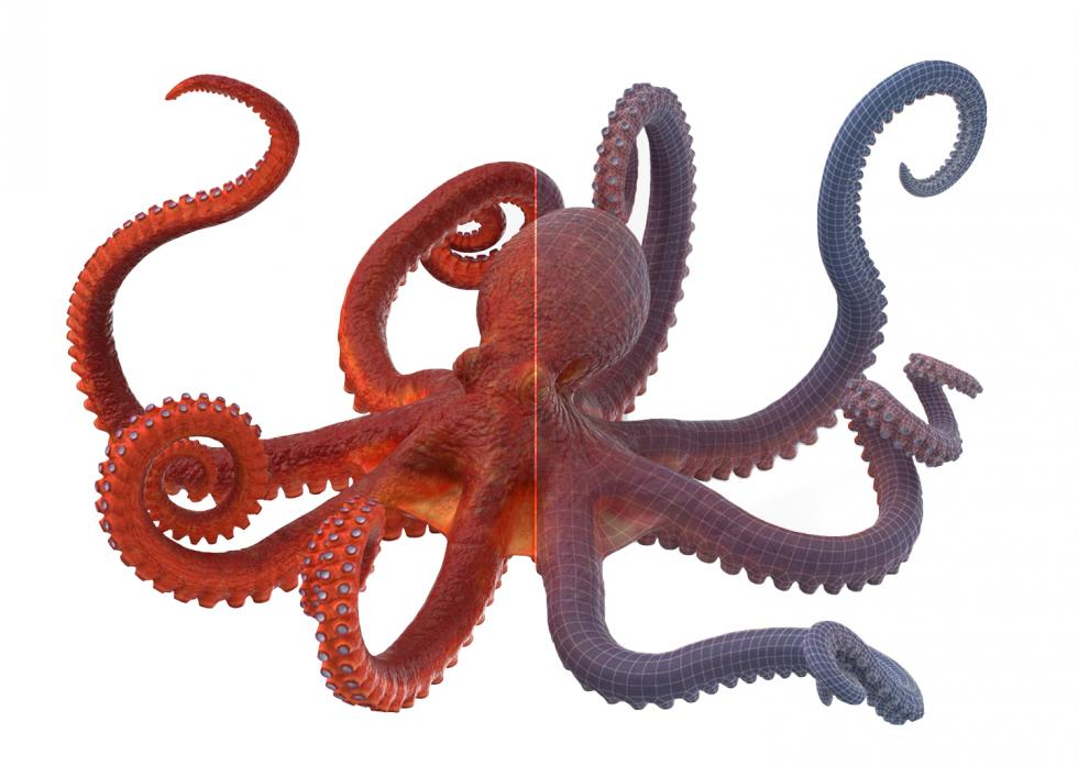 3D Octopus with Wireframe