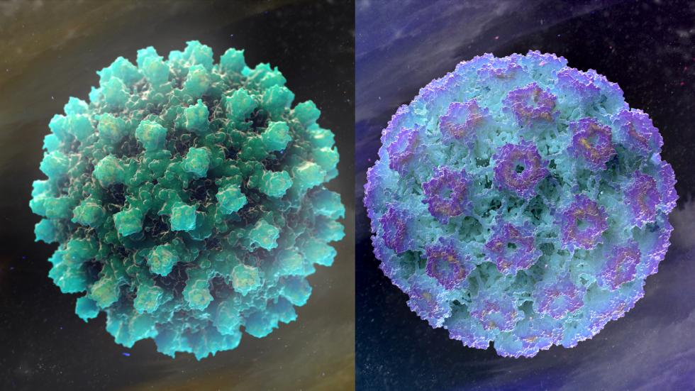 HBV and HPV Viruses 3D