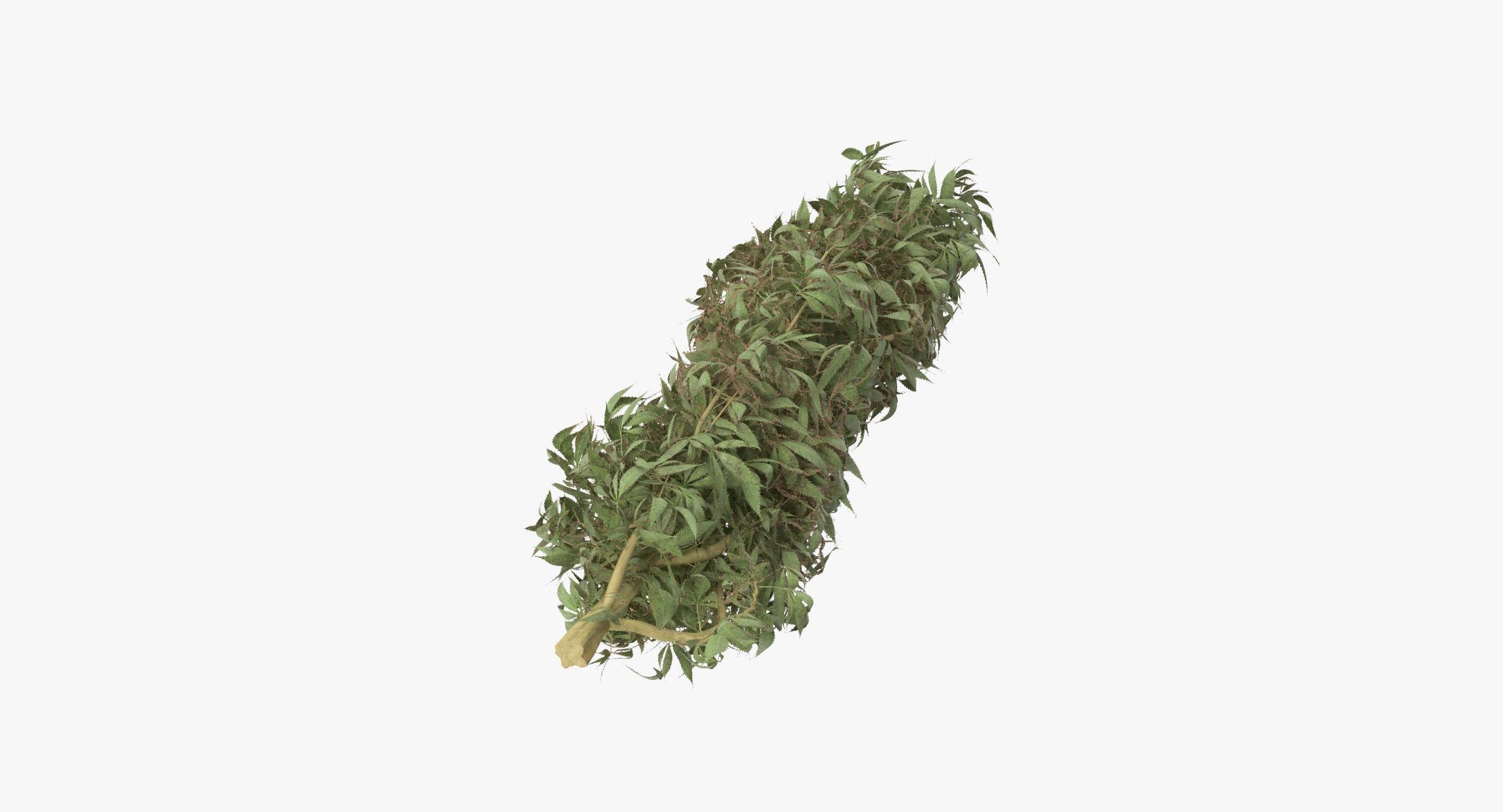 Marijuana Bud 01 01 - reel 1