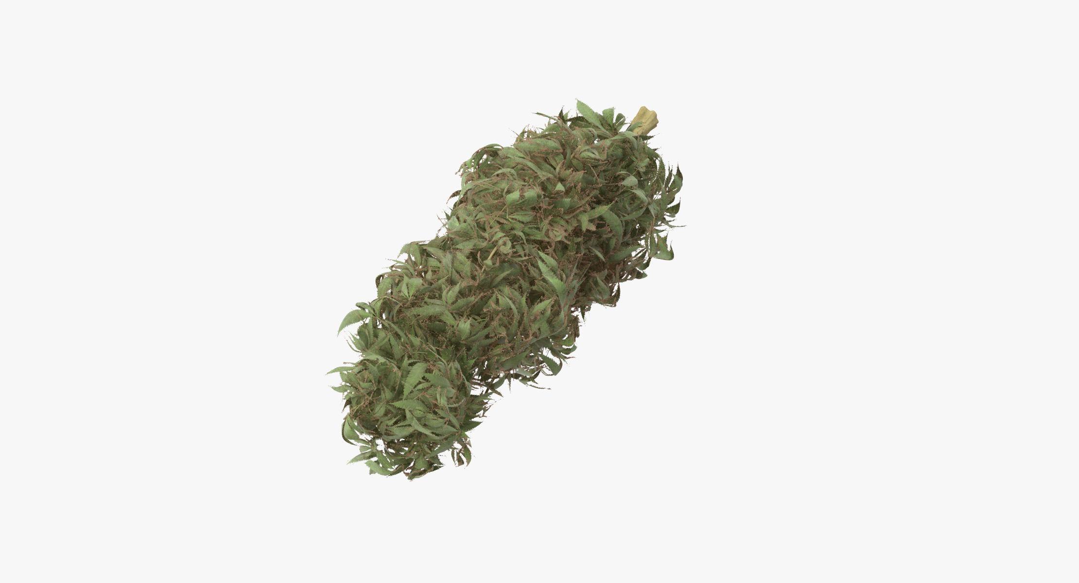 Marijuana Bud 01 03 - reel 1