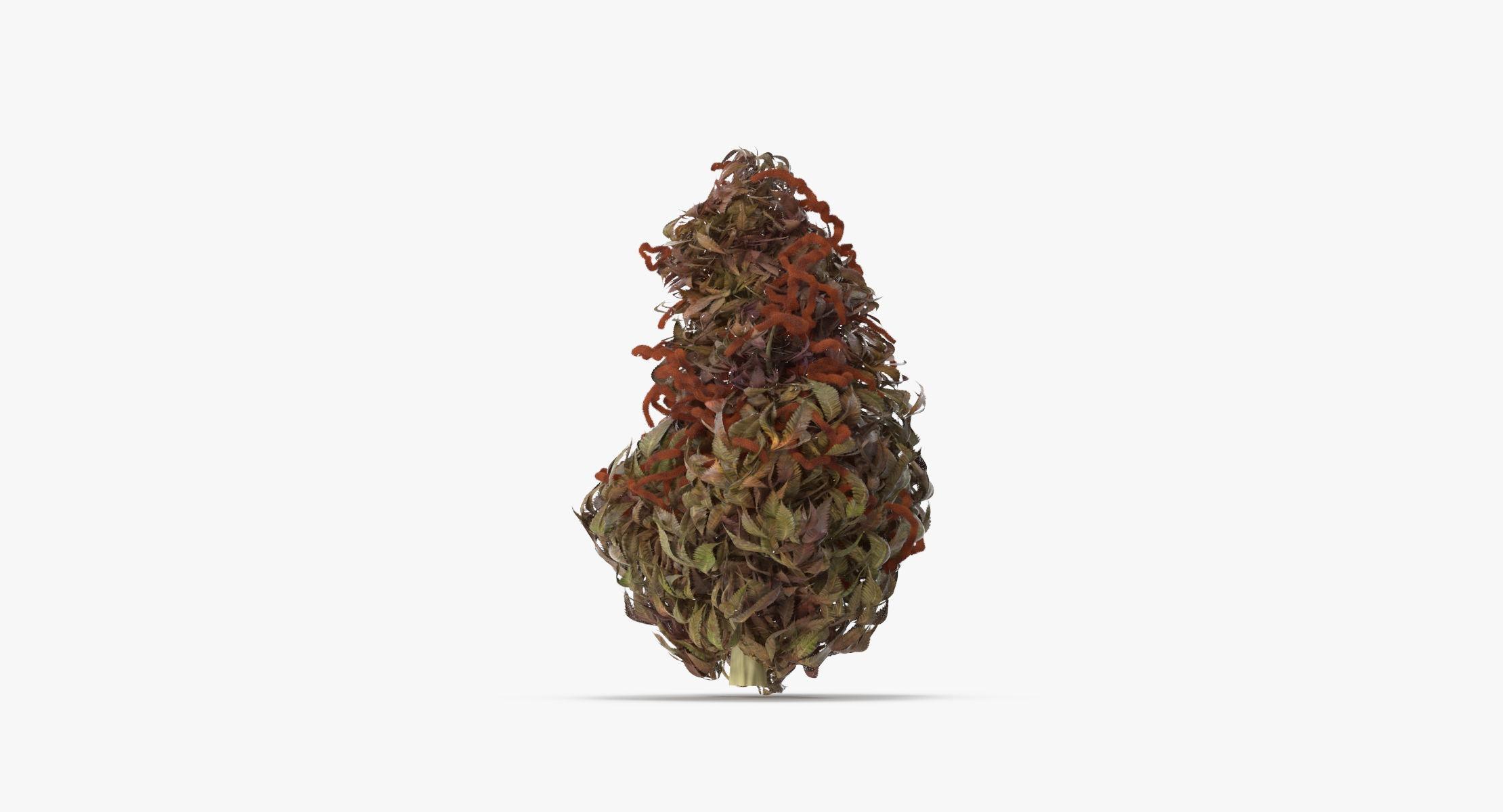 Marijuana Bud 02 03 - reel 1