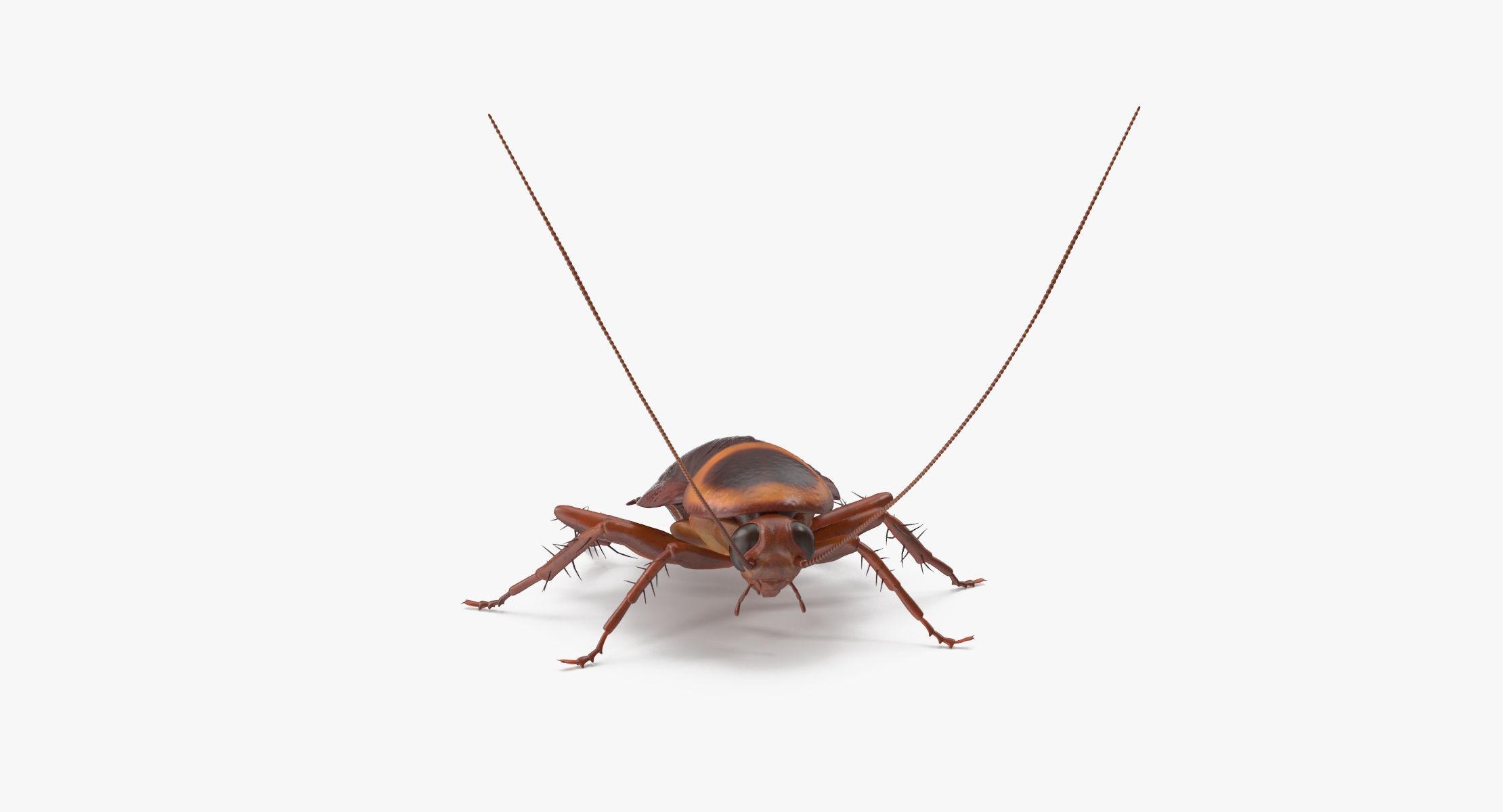Cockroach 01 - reel 1