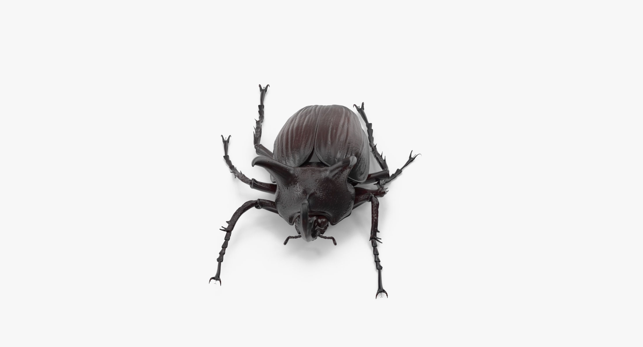 Rhinoceros Beetle Pose 01 - reel 1