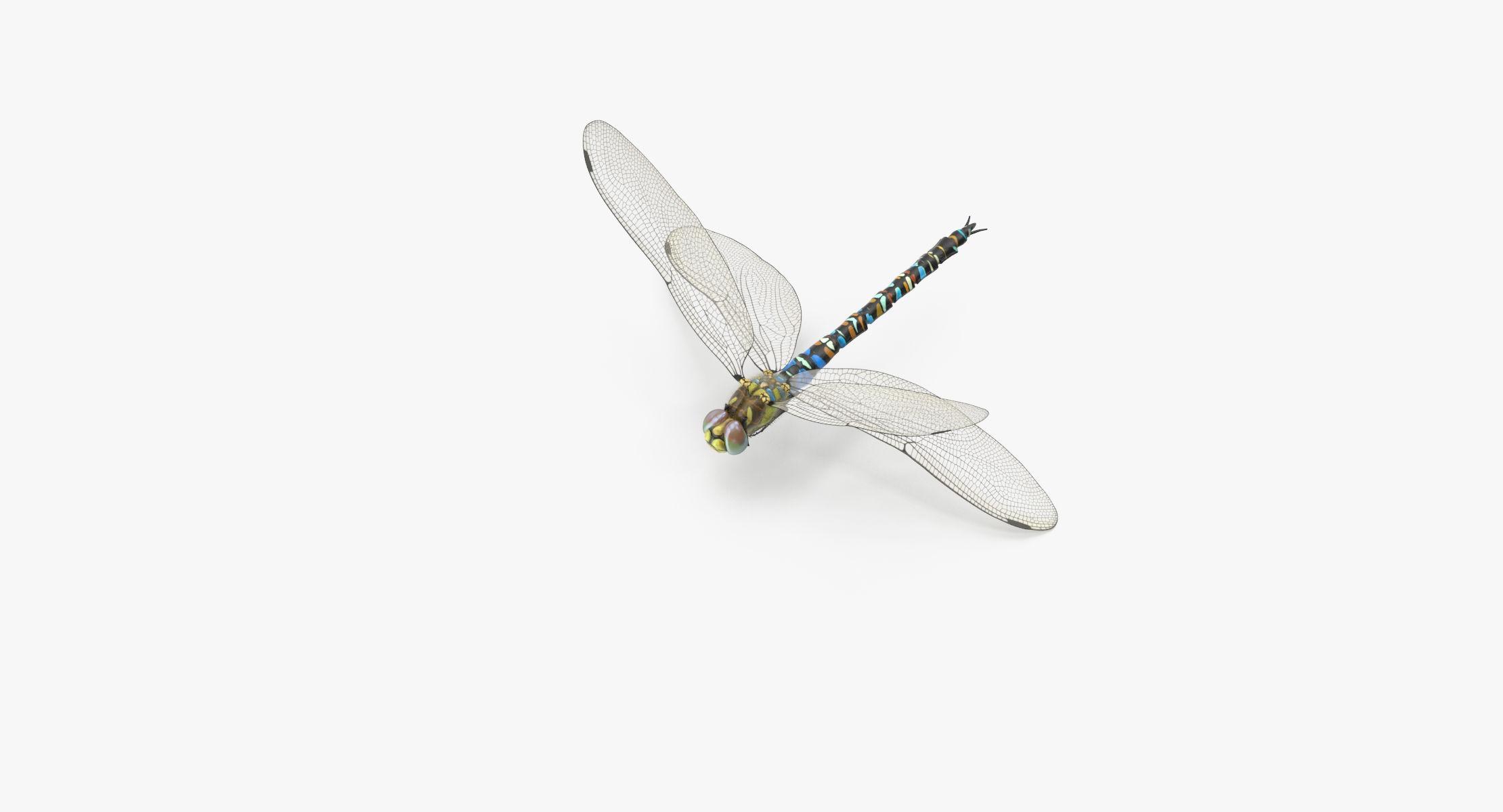 Dragonfly Pose 02 - reel 1
