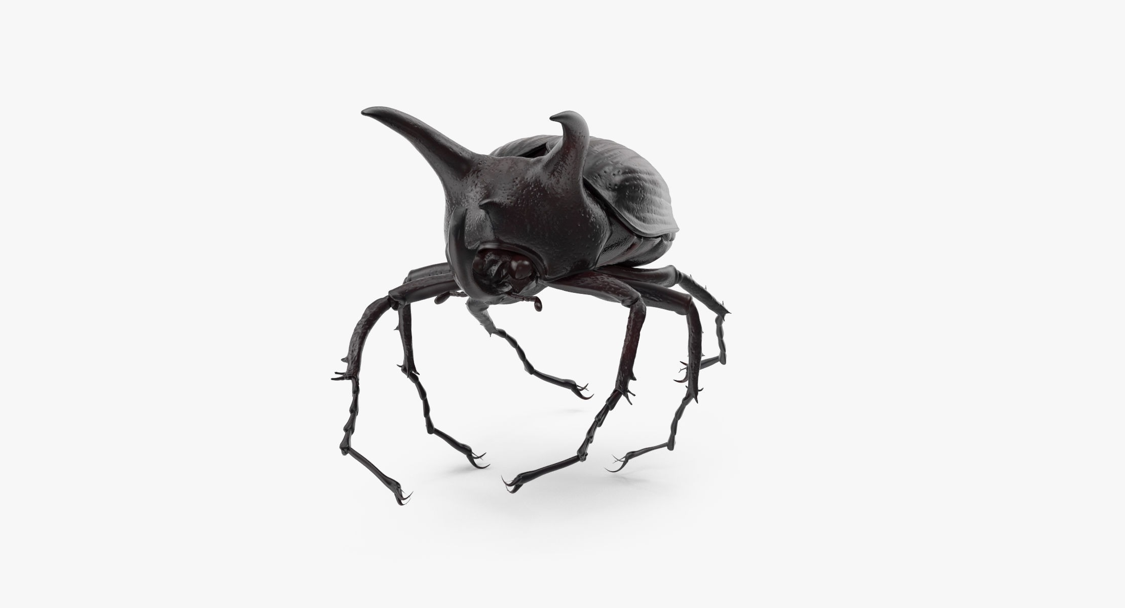 Rhinoceros Beetle Pose 03 - reel 1