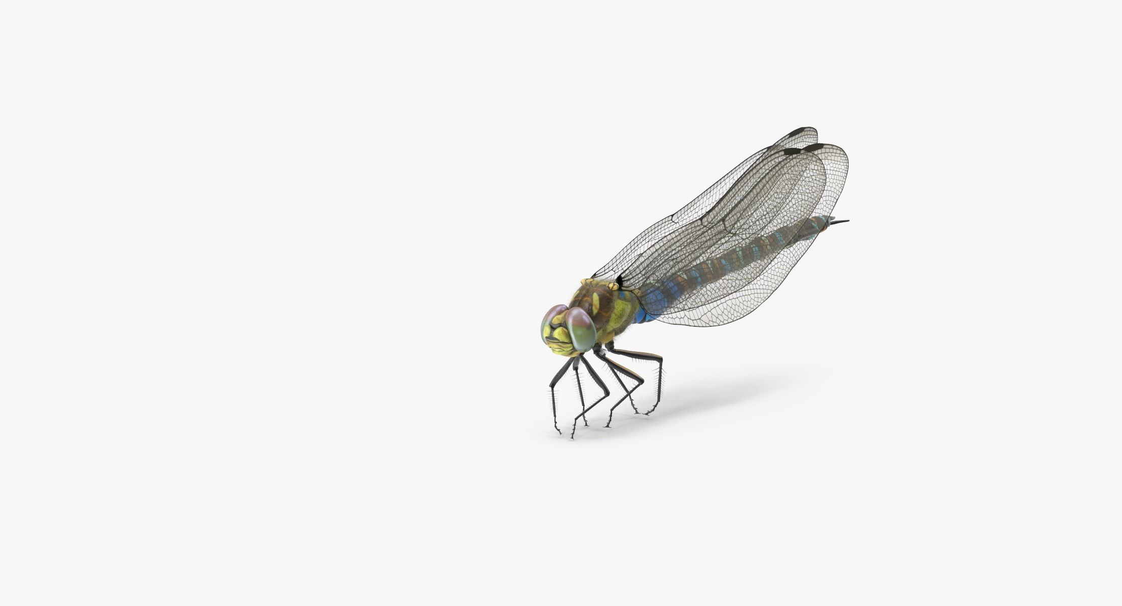 Dragonfly Pose 03 - reel 1