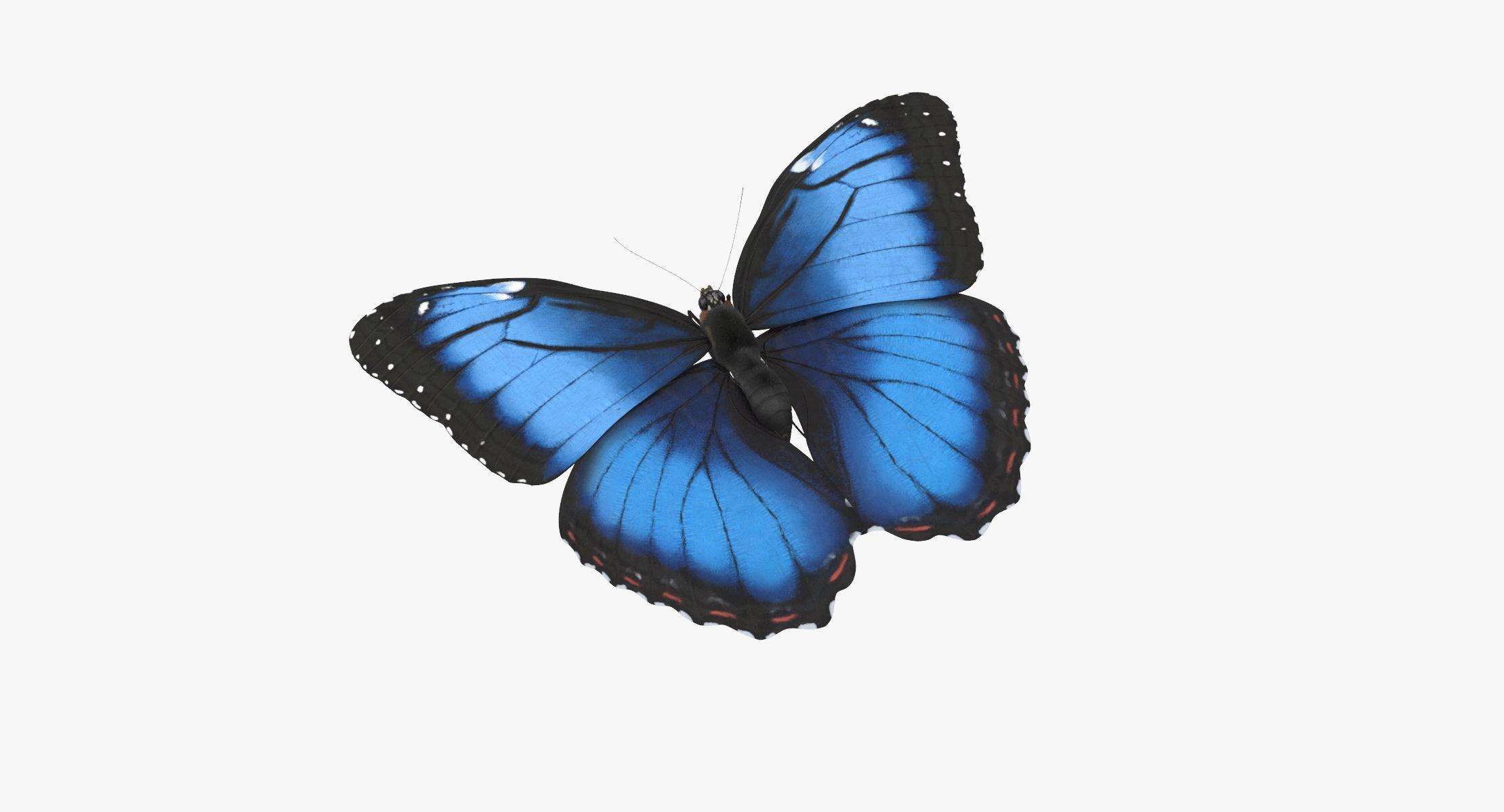 Blue Morpho Butterfly Flying Pose 02 - reel 1
