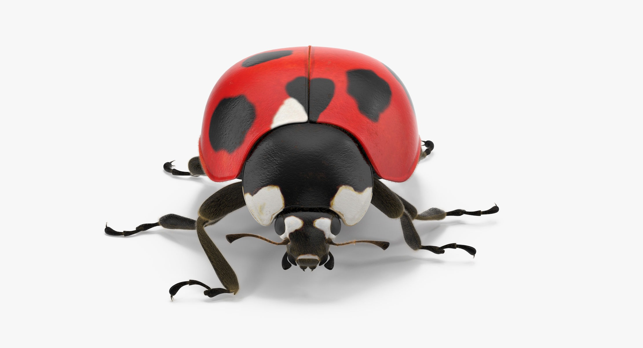 Ladybug 03 - reel 1