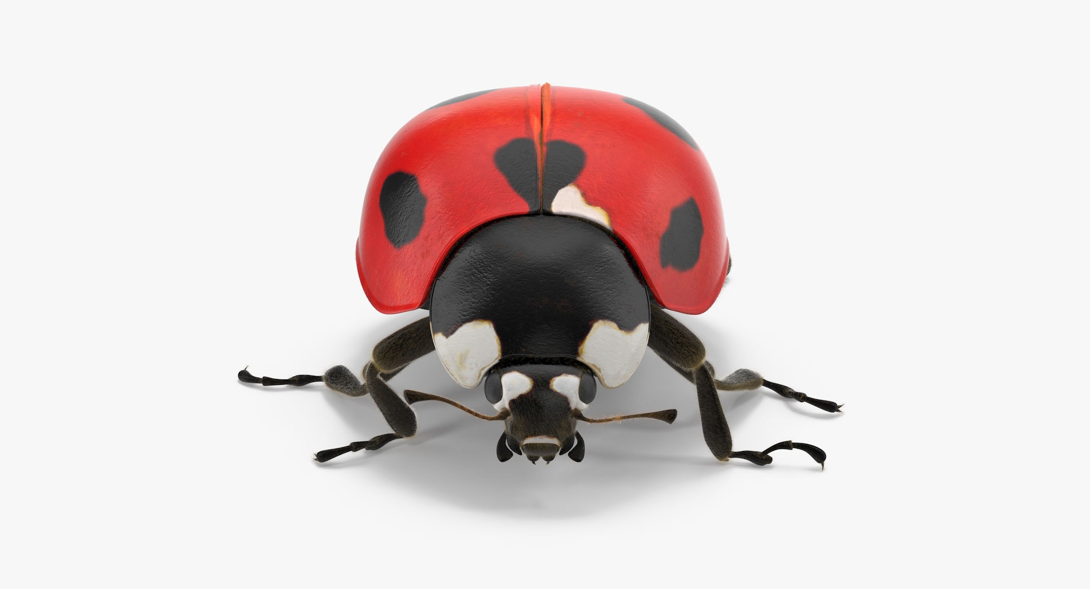 Ladybug 02 - reel 1
