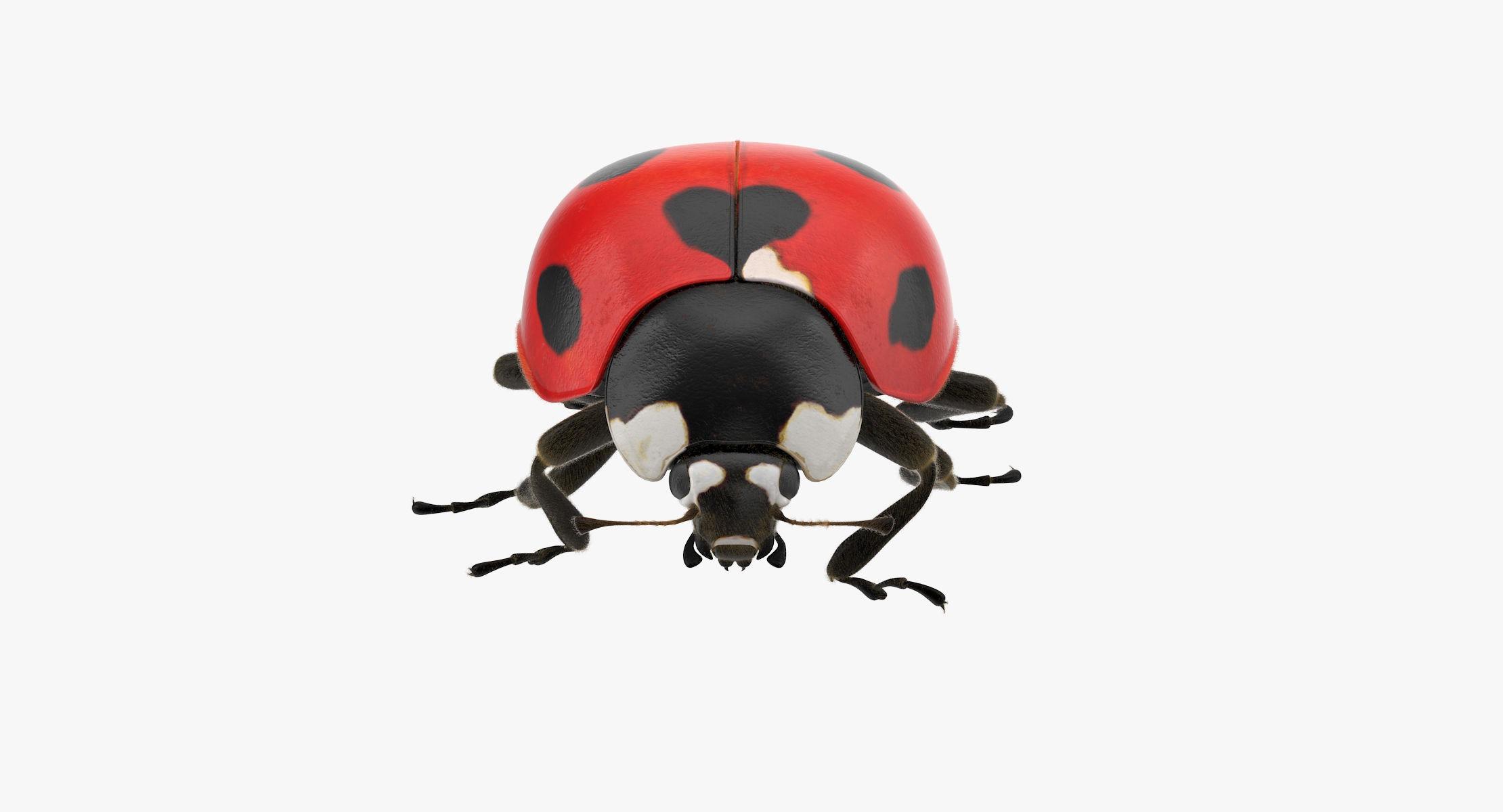 Ladybug 01 - reel 1