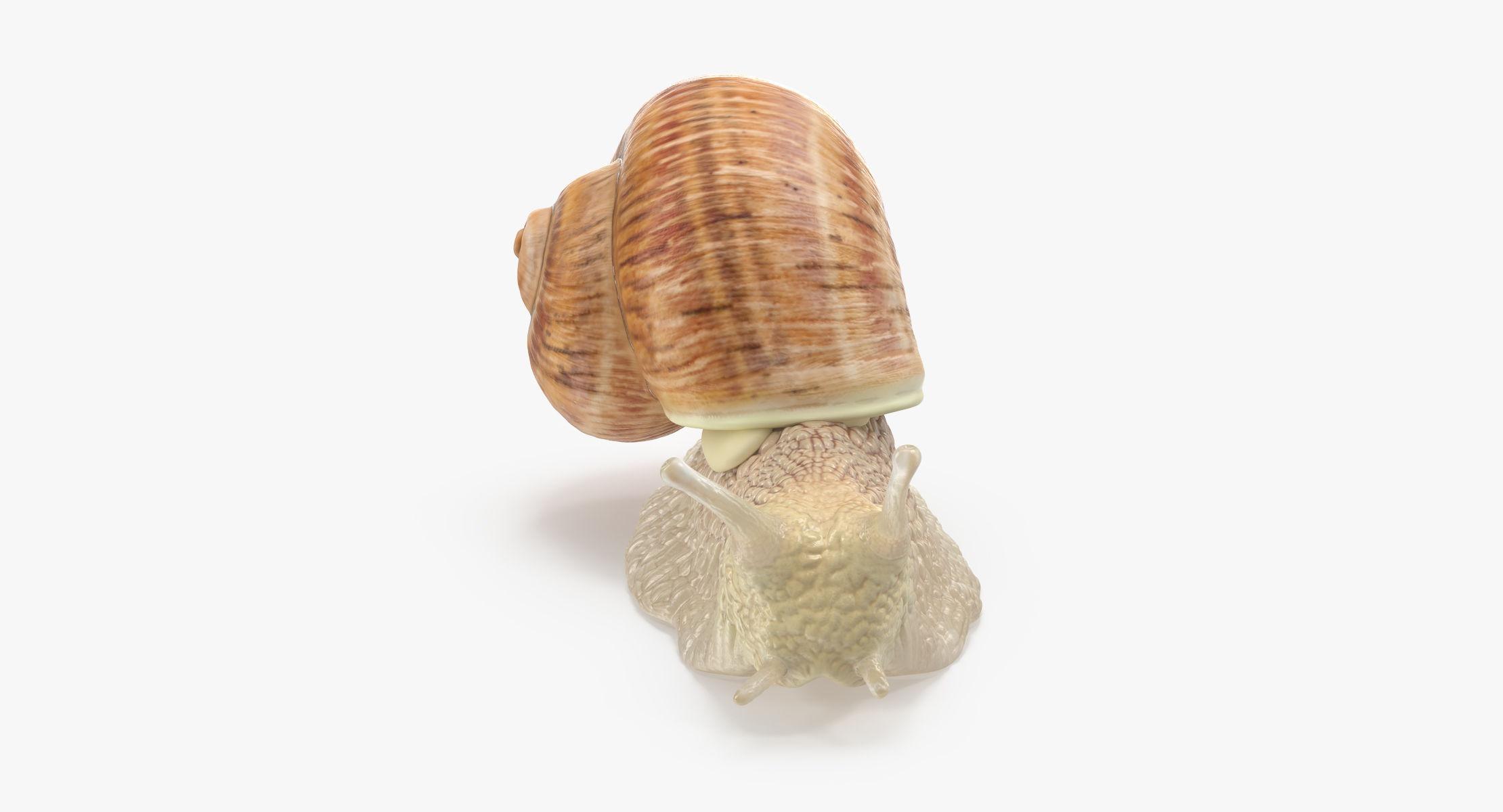 Snail 03 - reel 1