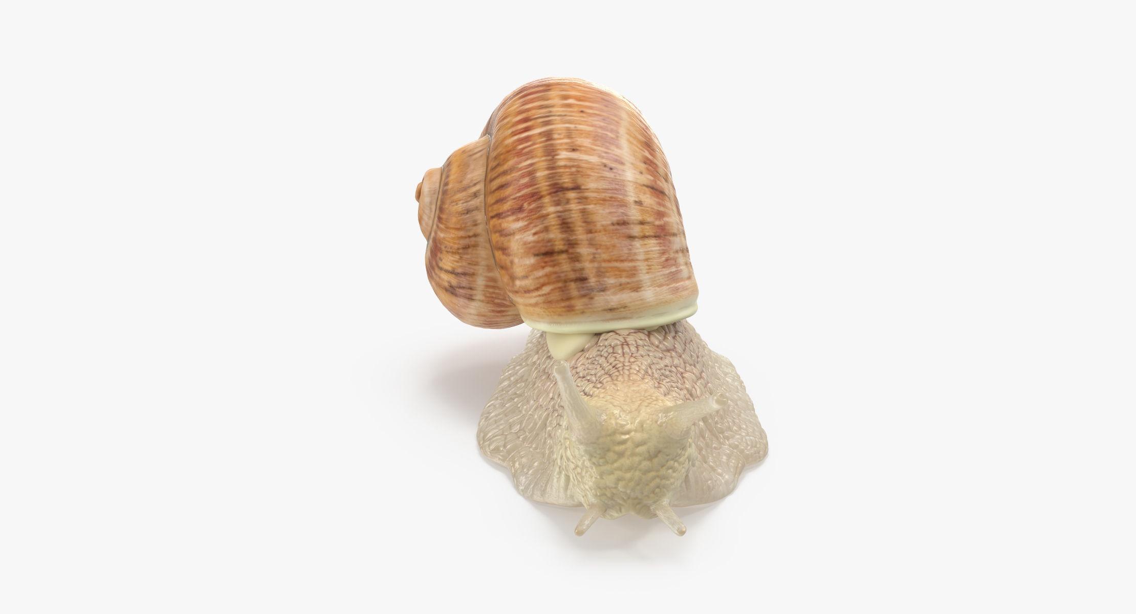 Snail 02 - reel 1