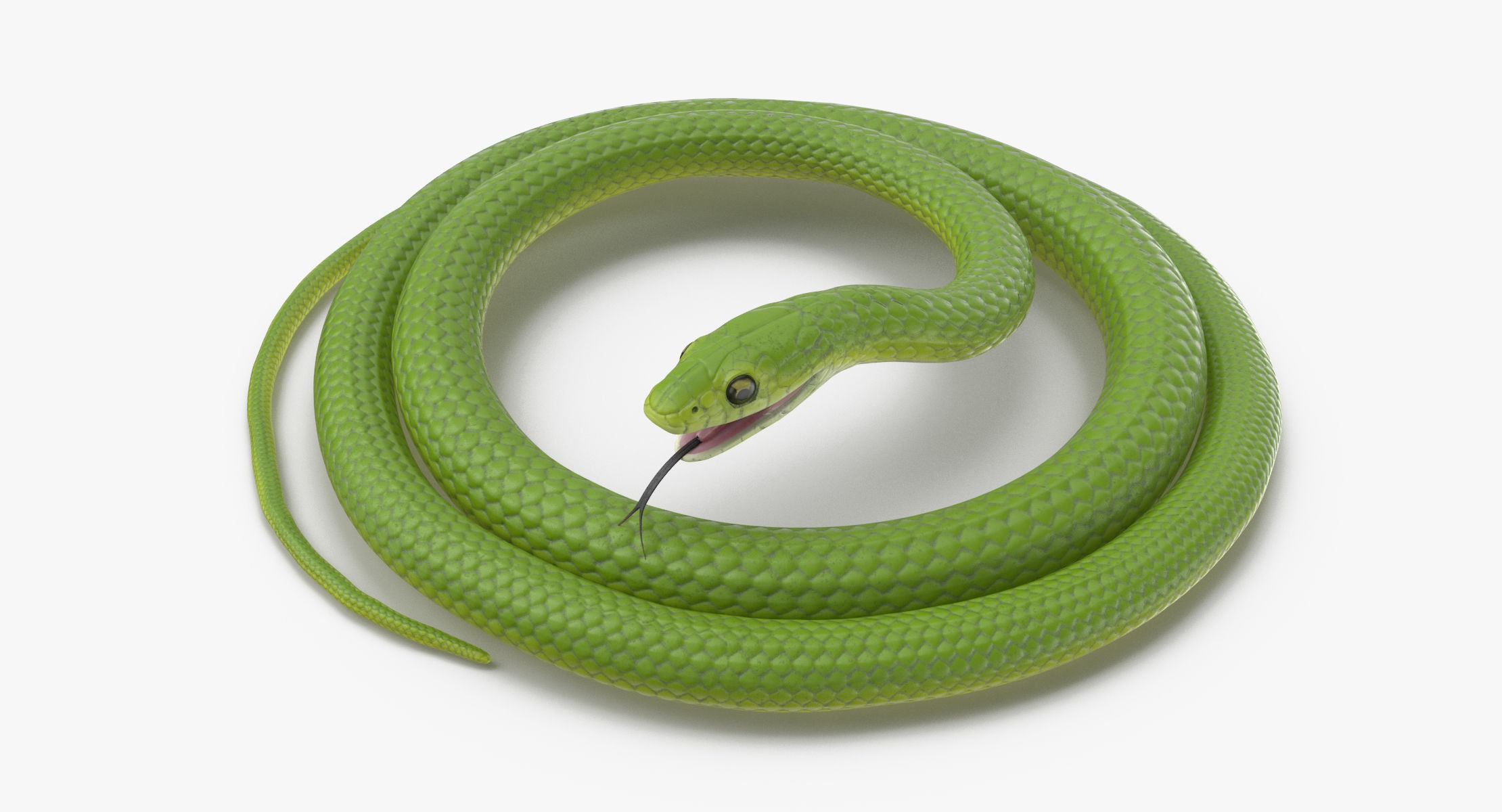 Green Snake Rigged - reel 1