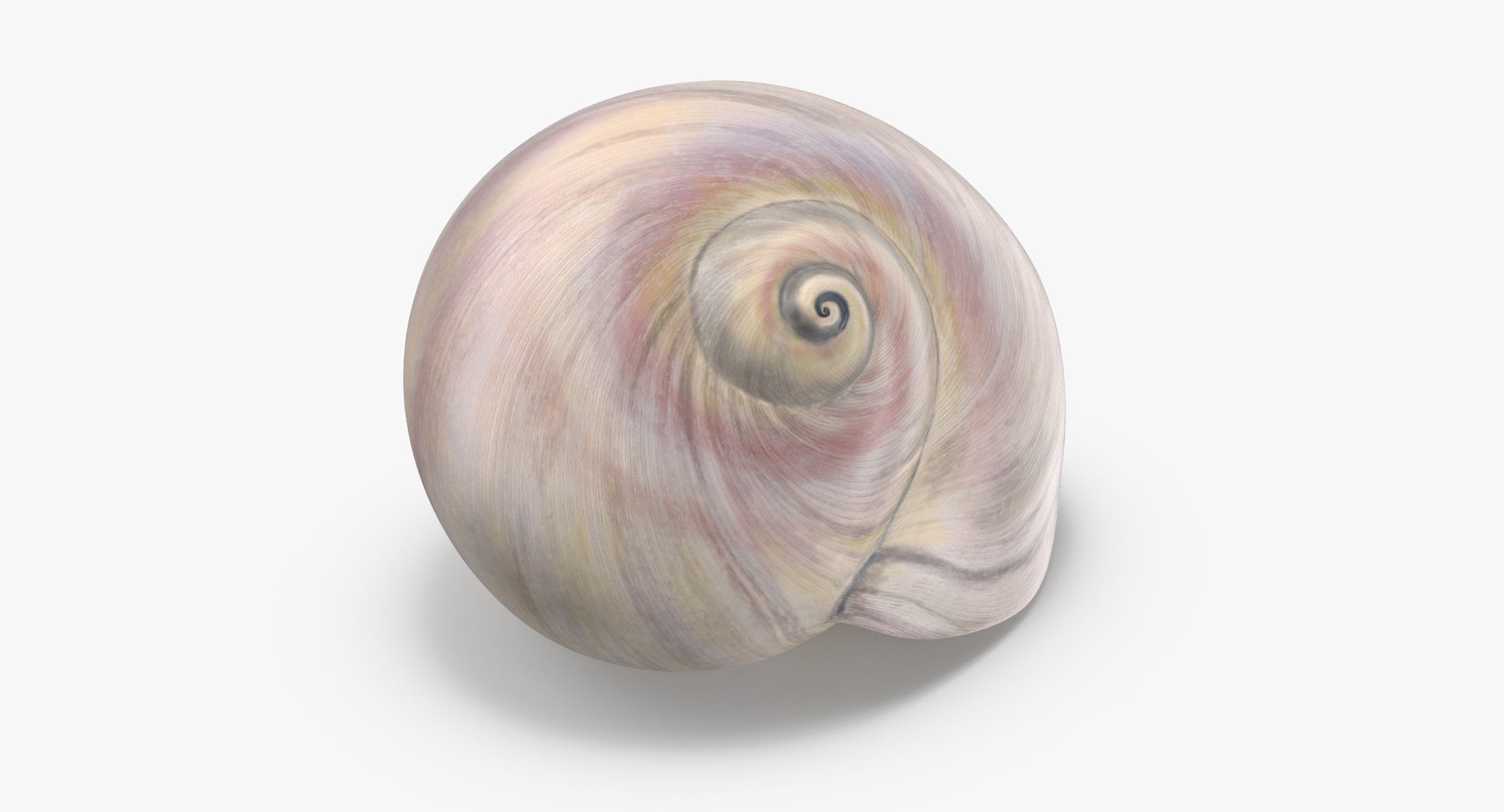Sharkeye Moon Shell - reel 1