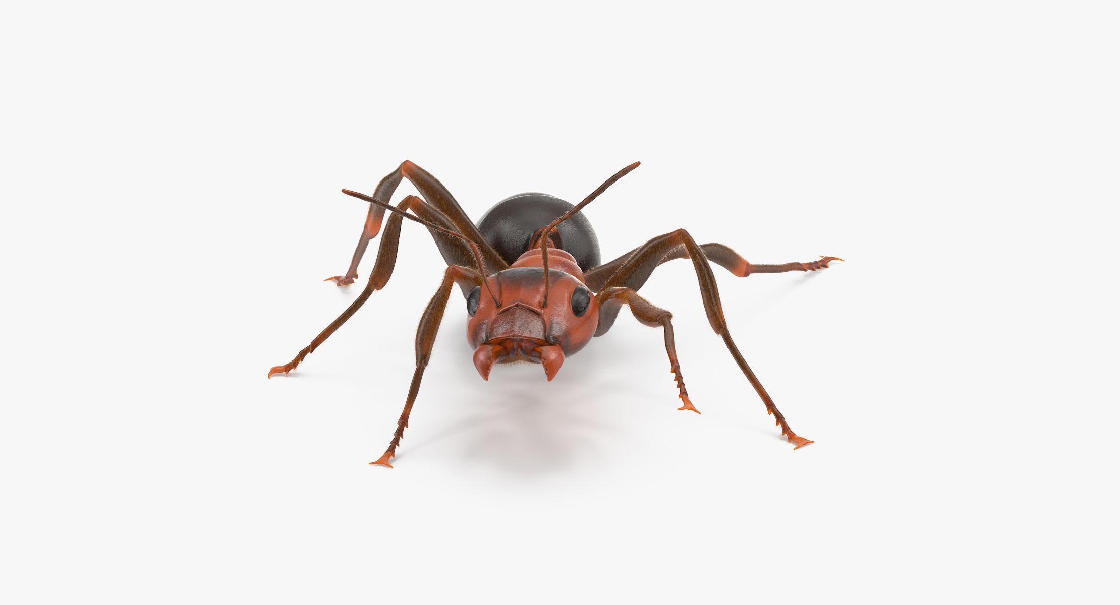 Ant 04 - reel 1