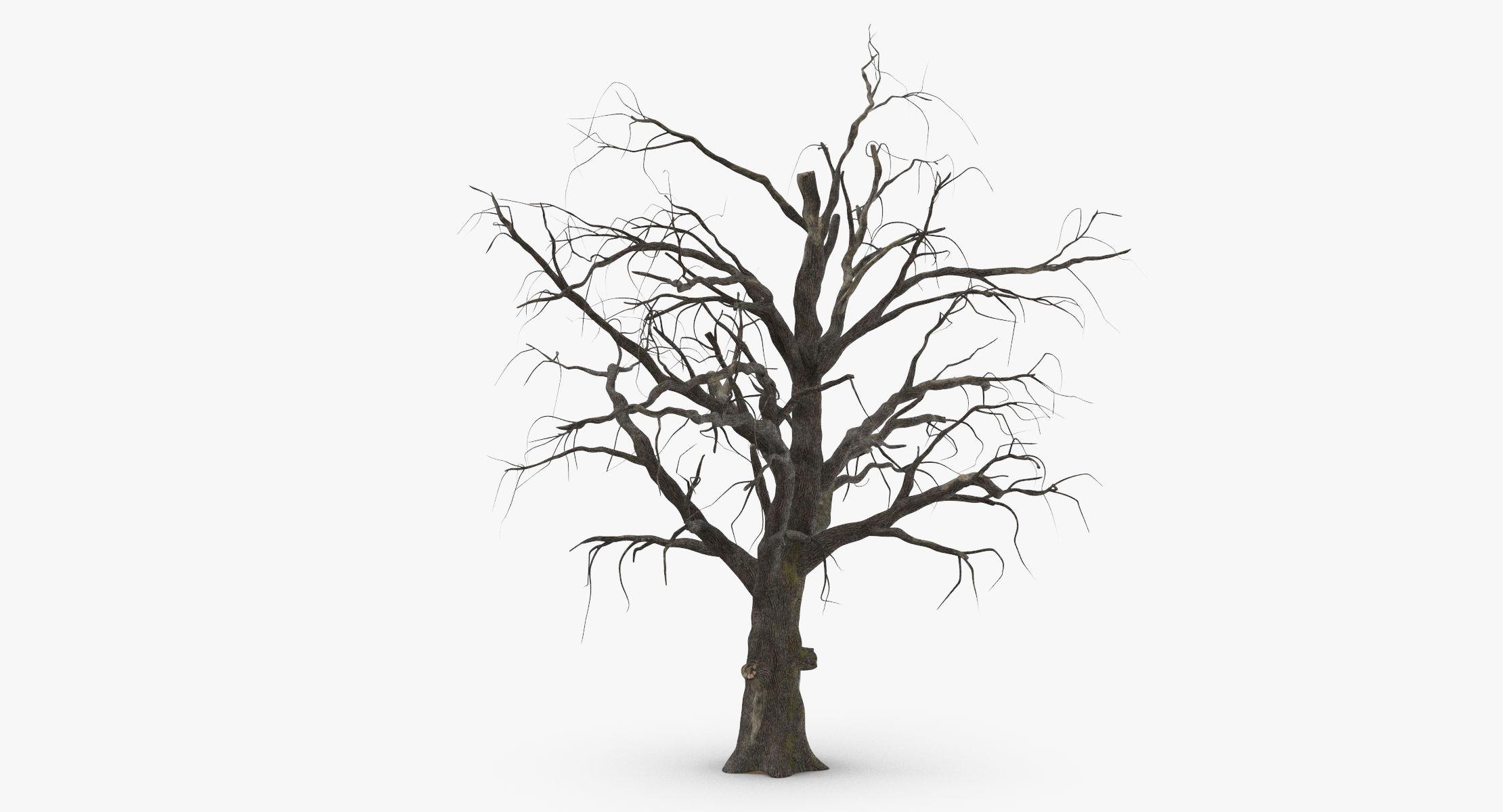 Old Dead Tree 01 - reel 1