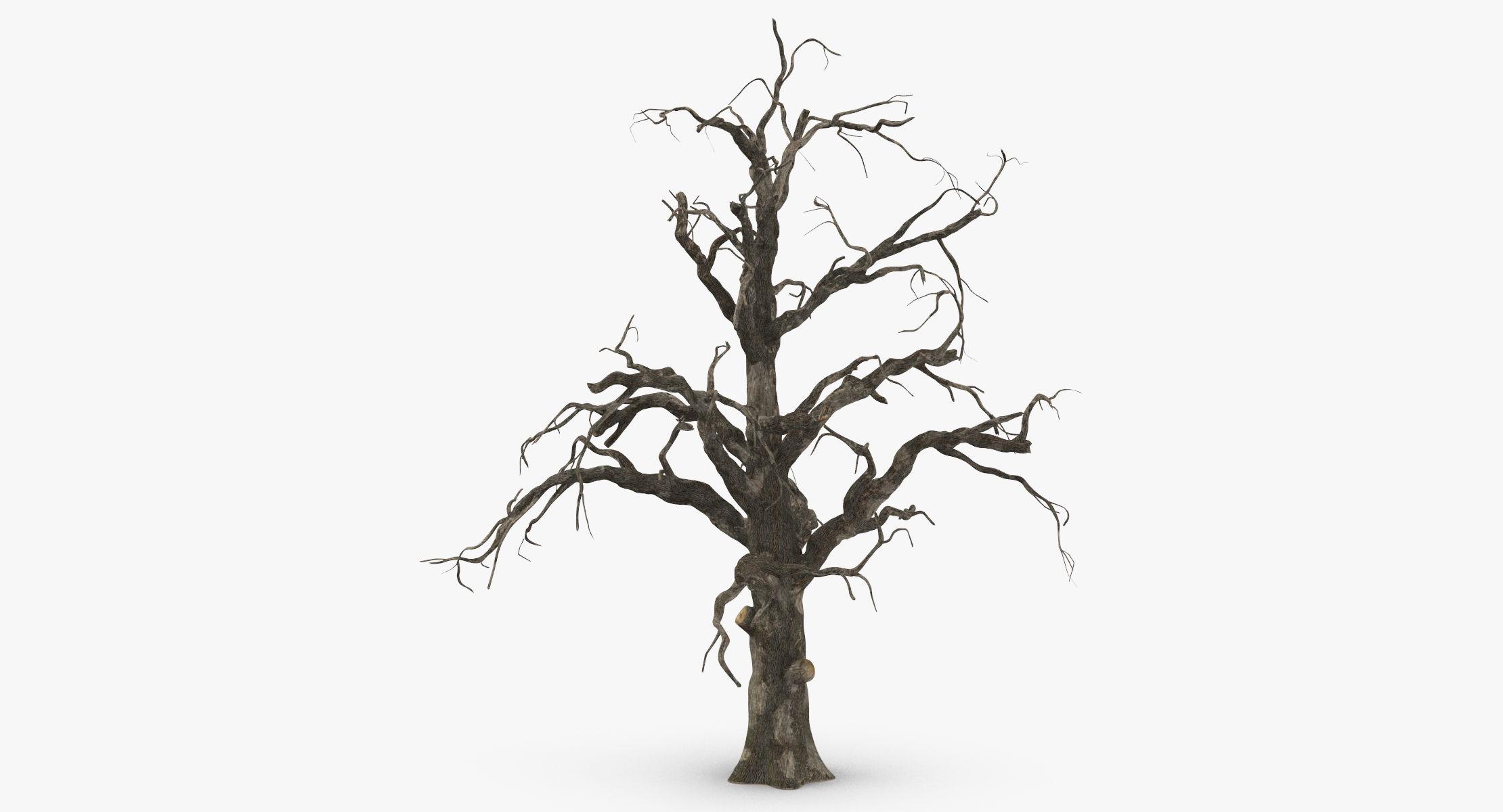 Old Dead Tree 02 - reel 1
