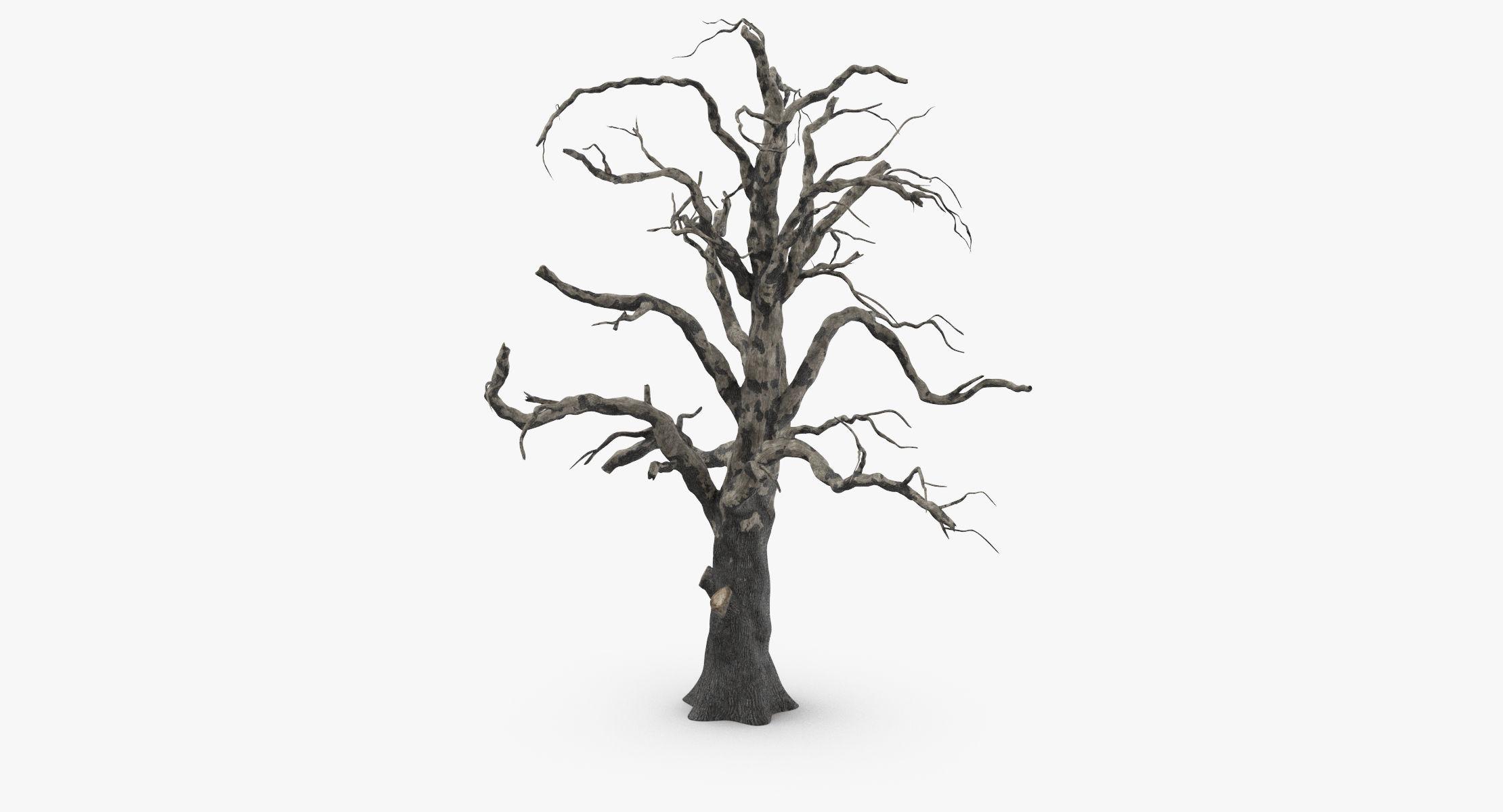 Old Dead Tree 03 - reel 1