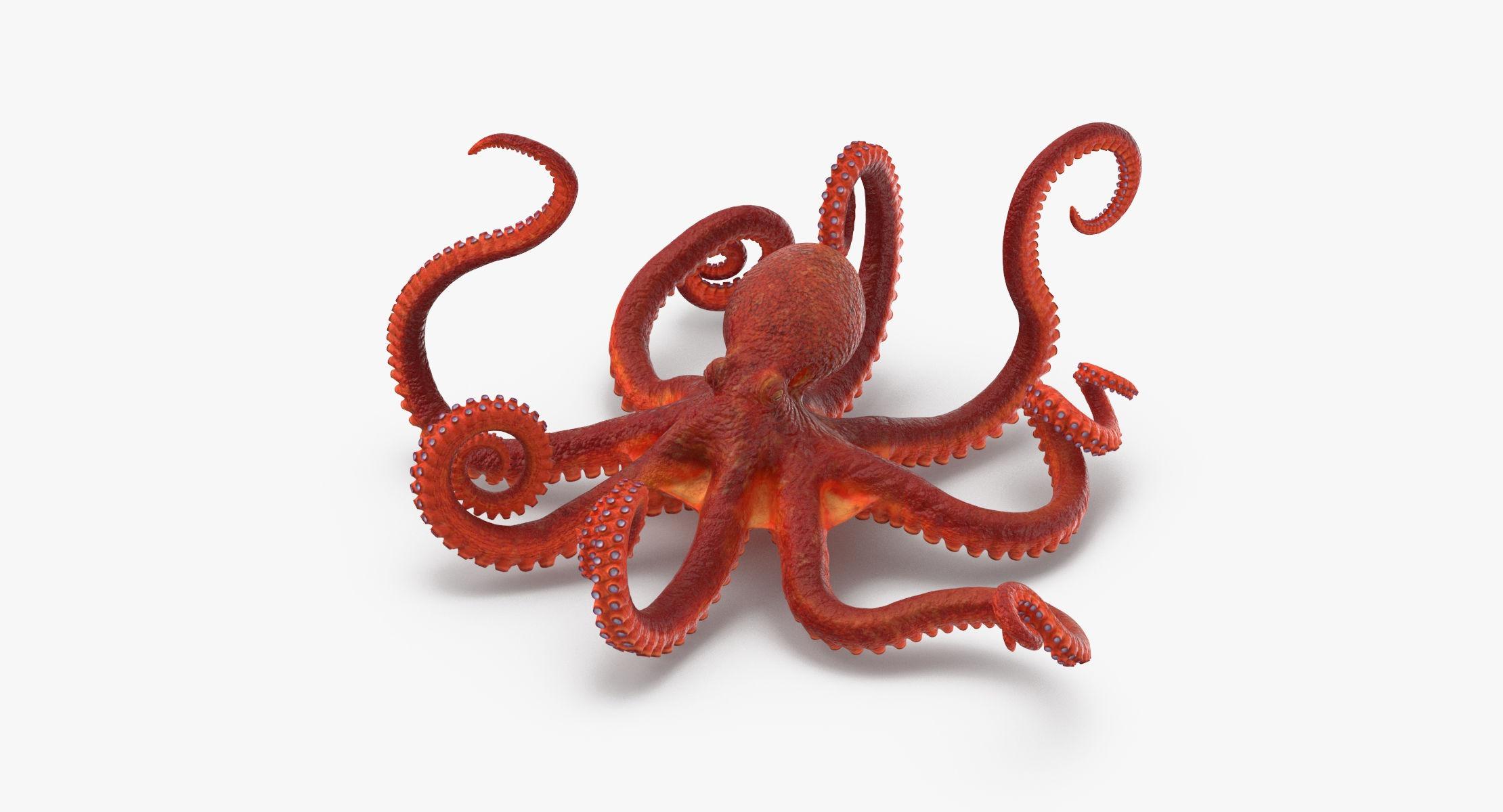 Octopus - Rigged - reel 1