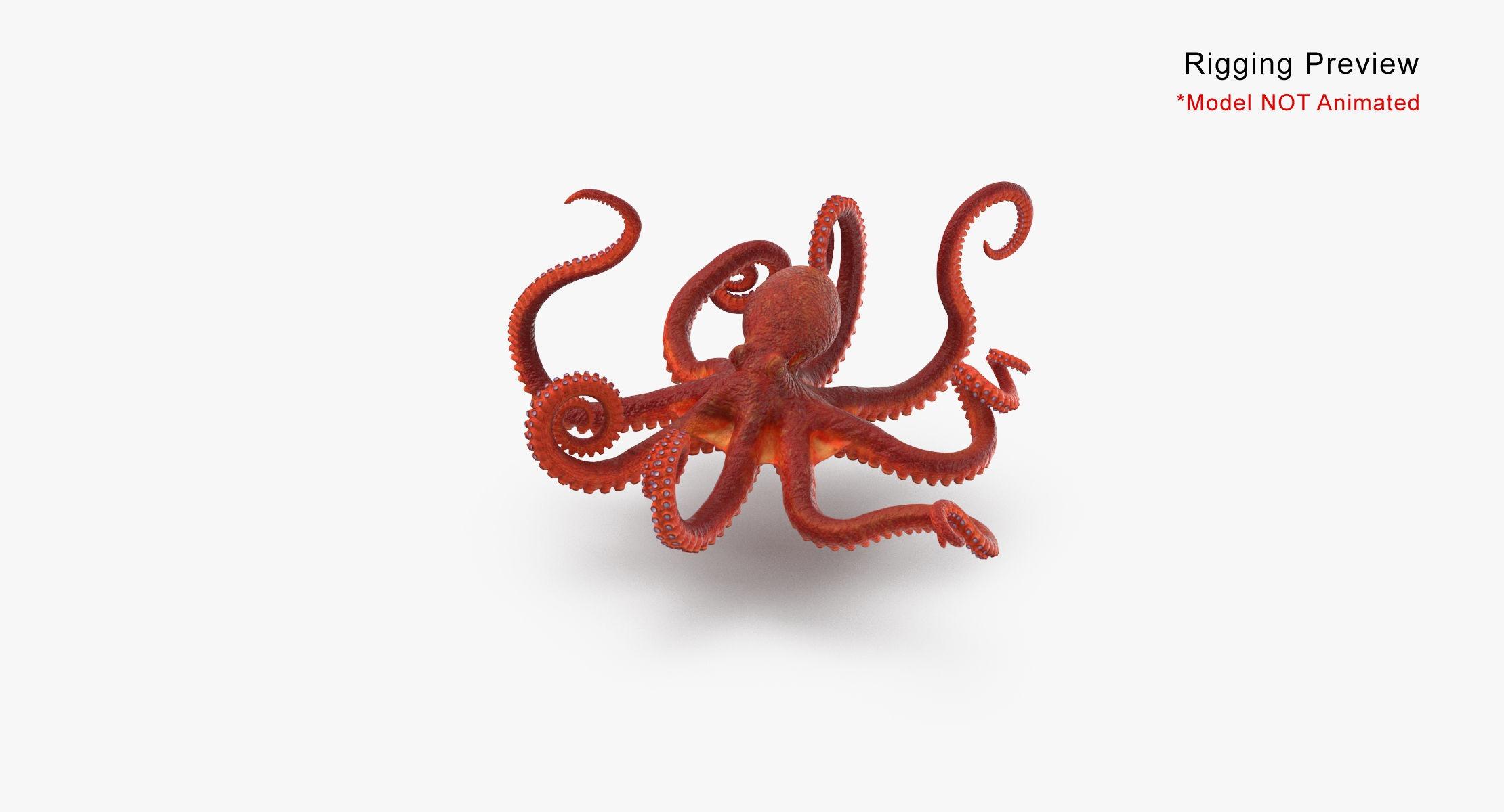 Octopus - Rigged - reel 2