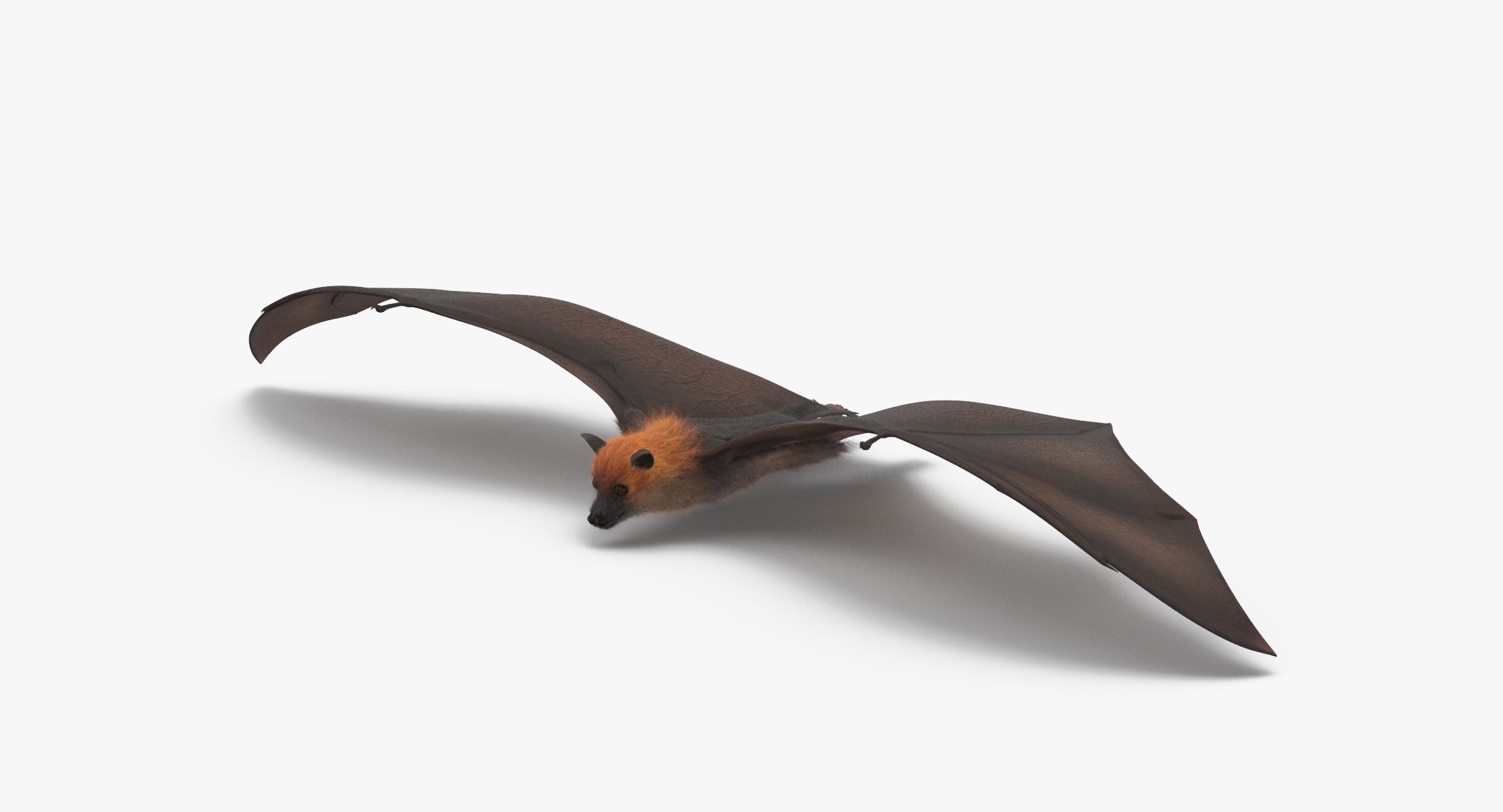 Fruit Bat Flying - reel 1