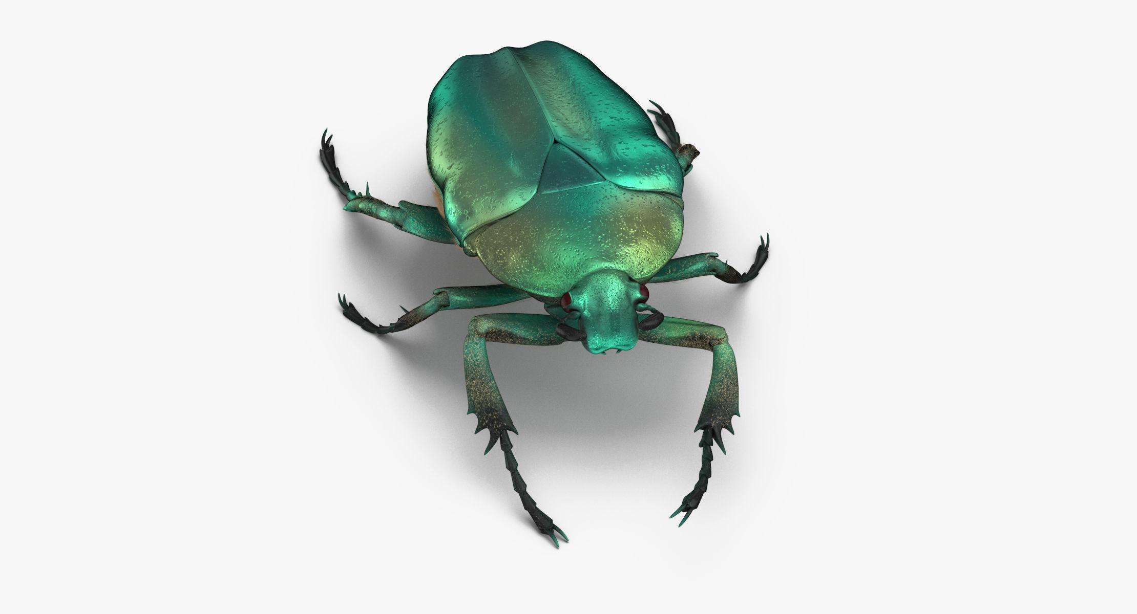 Green Scarab Beetle Walking 02(1) 3D model - reel 1