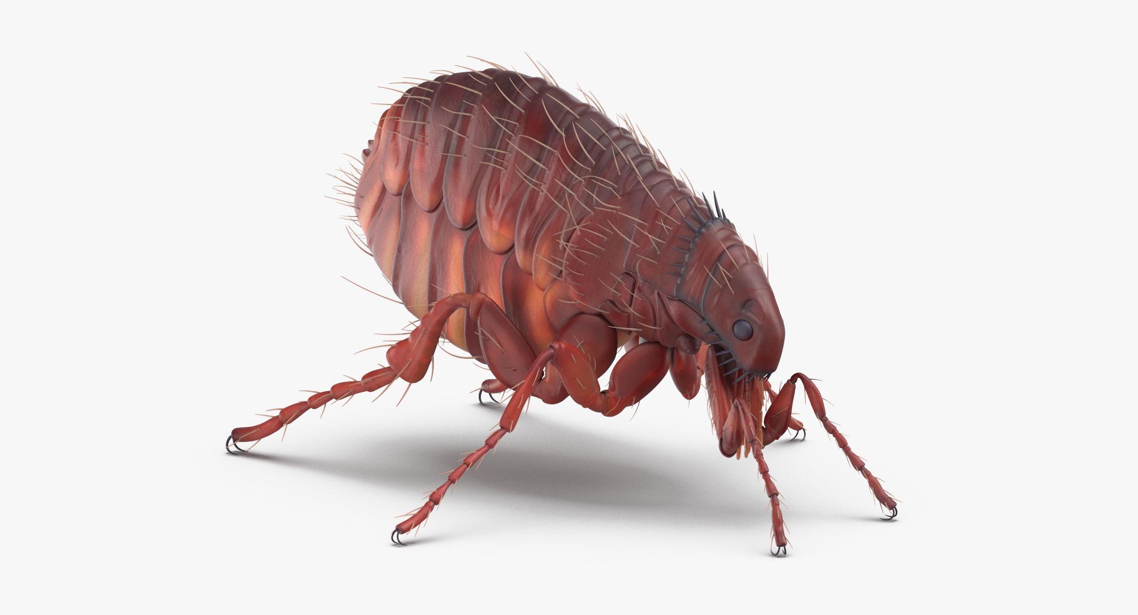 Flea Standing - reel 1
