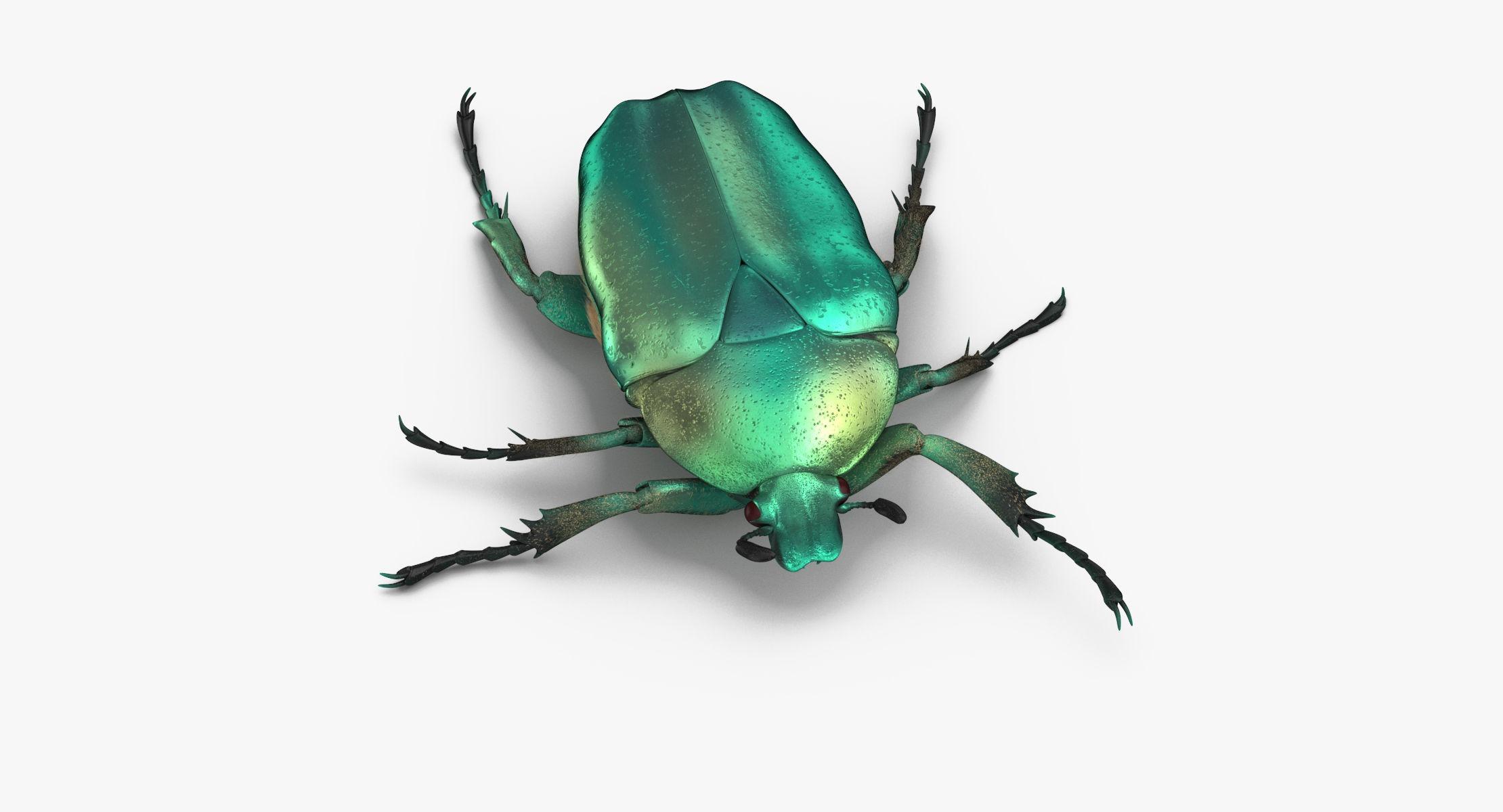 Green Scarab Beetle Walking 01 model - reel 1